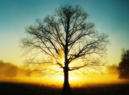 big_tree_spring