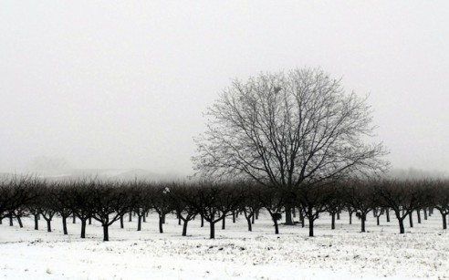 Winter-Trees-Monochrome