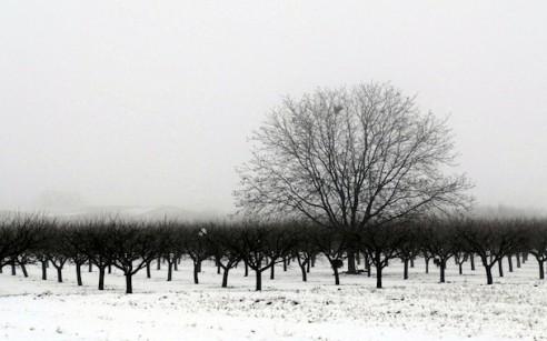Winter-Trees-Monochrome
