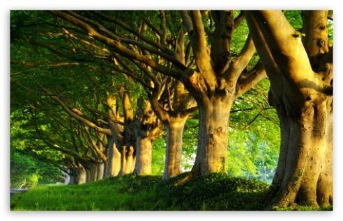summer_trees-t2