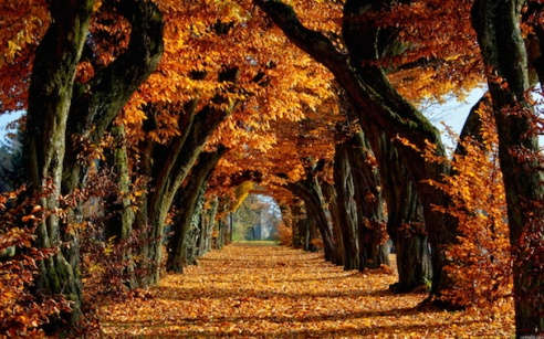 Fall-Autumn-Trees-Leaves-Nature-Images