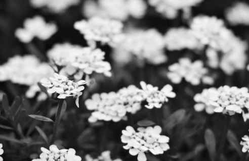spring-time-1-black-and-white